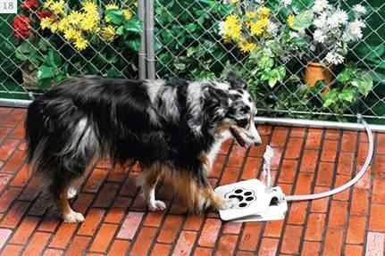 Fuente para perros