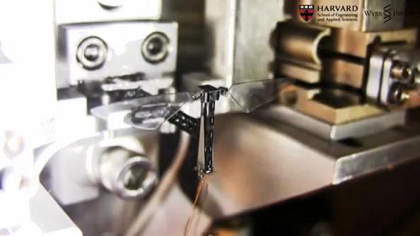 Harvard insecto robotico