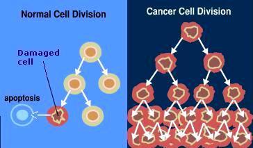 Descubren mecanismo natural que podría frenar el cáncer