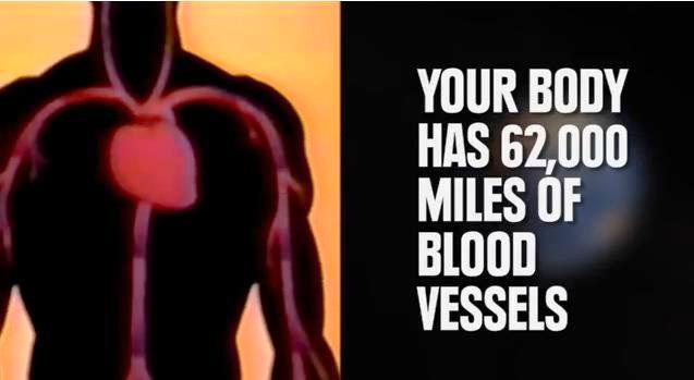 El cuerpo humano no es tan pequeño comparado con la Tierra