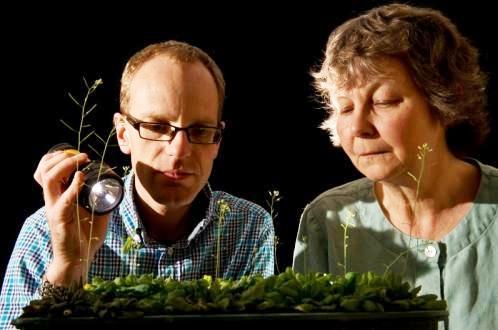 Las plantas usan aritmética para sobrevivir