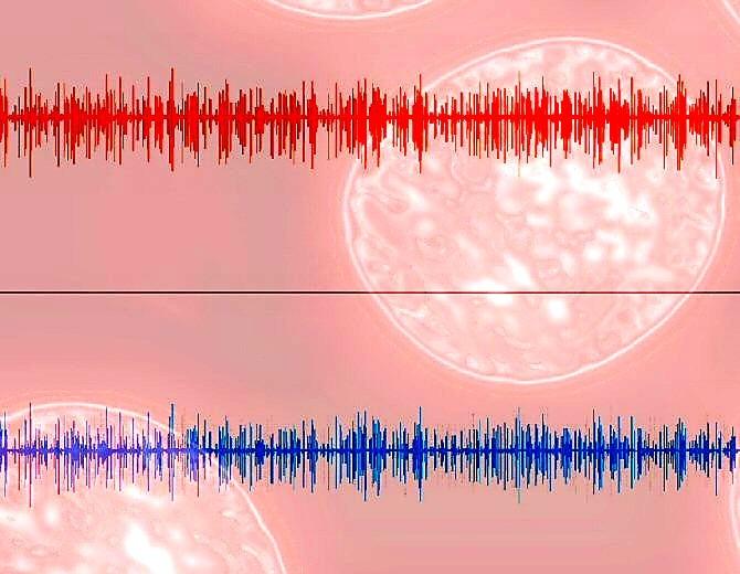 Diagnosticarán enfermedades solo escuchando a los glóbulos rojos