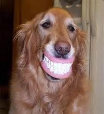"""Fabrican """"dientes"""" hechos de orina"""