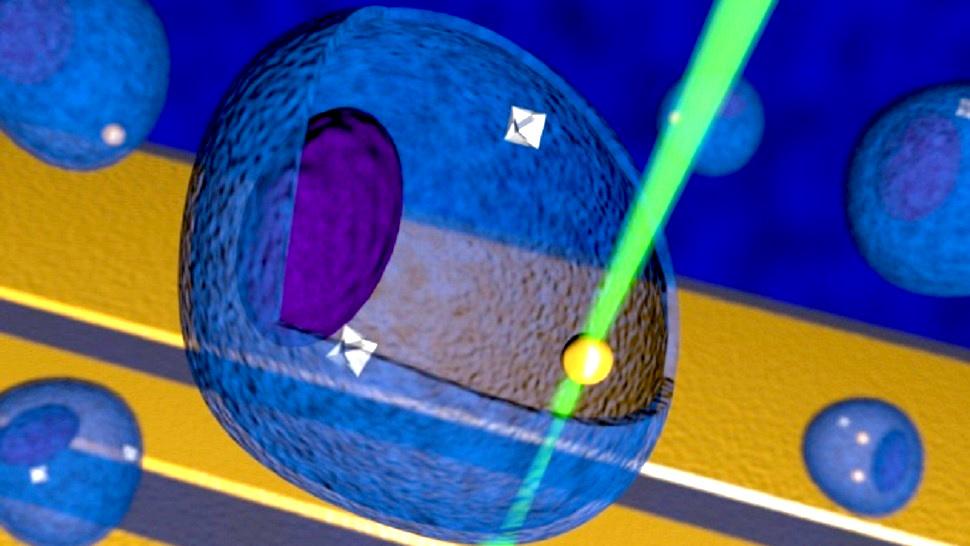 Fabrican nano-termómetro que mide la temperatura de células individuales