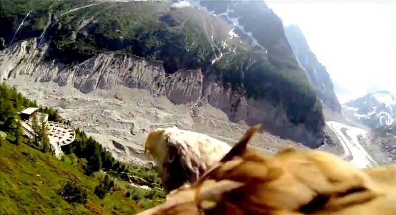 El punto de vista de un águila en vuelo