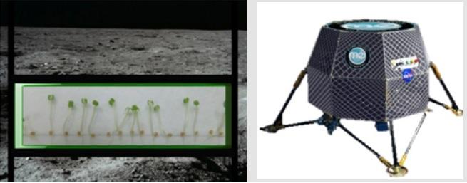 La NASA quiere hacer germinar plantas en la Luna