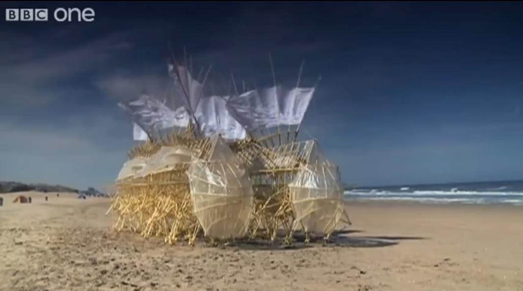 Asombrosas criaturas playeras que aprovechan la energía del viento