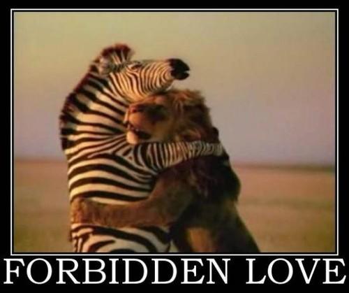 Compraobado científicamente: el amor alivia el dolor