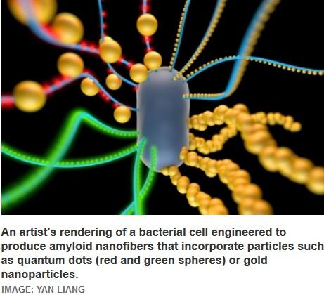 """Investigadores del MIT desarrollan materiales """"vivientes"""""""
