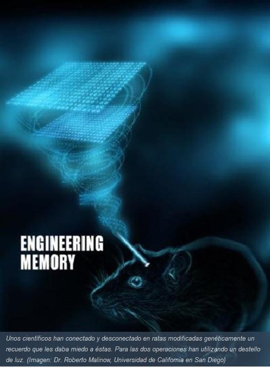 Activan y desactivan recuerdos usando destellos de luz