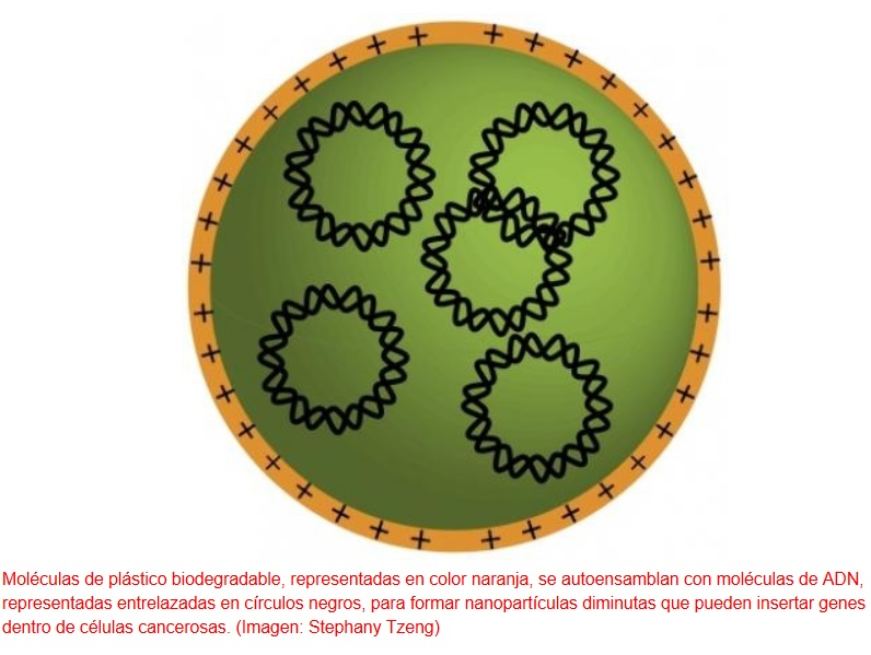 Nano-caballos de troya que entran en células cancerosas para eliminarlas