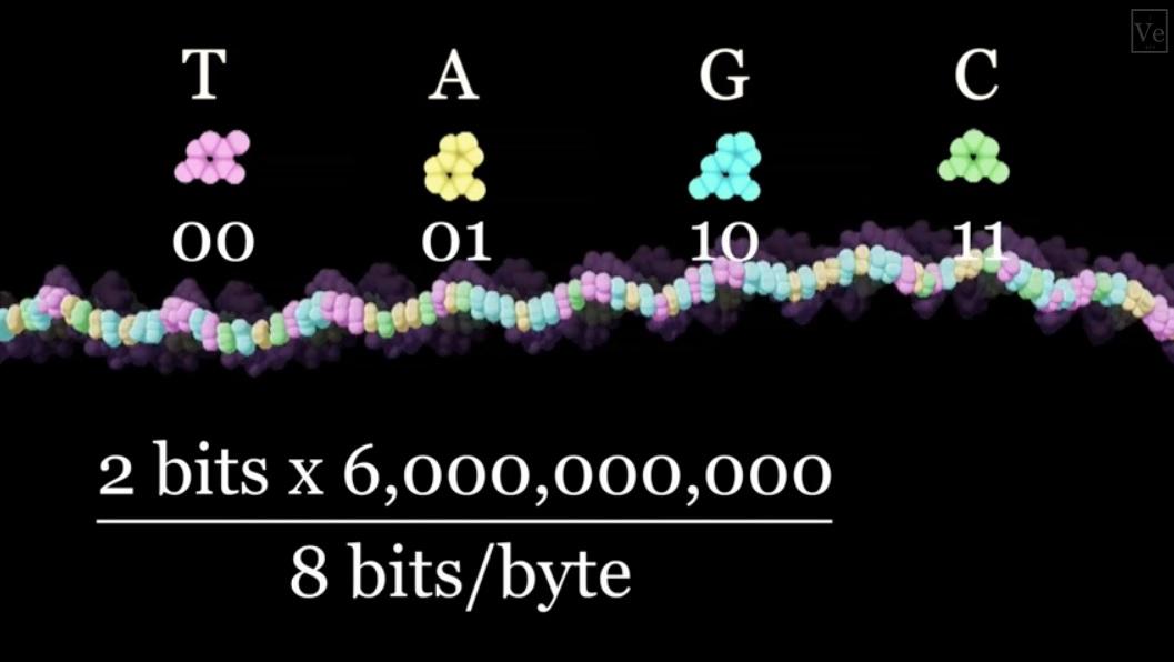 Cuántos gigabytes se requieren para hacer un ser humano?