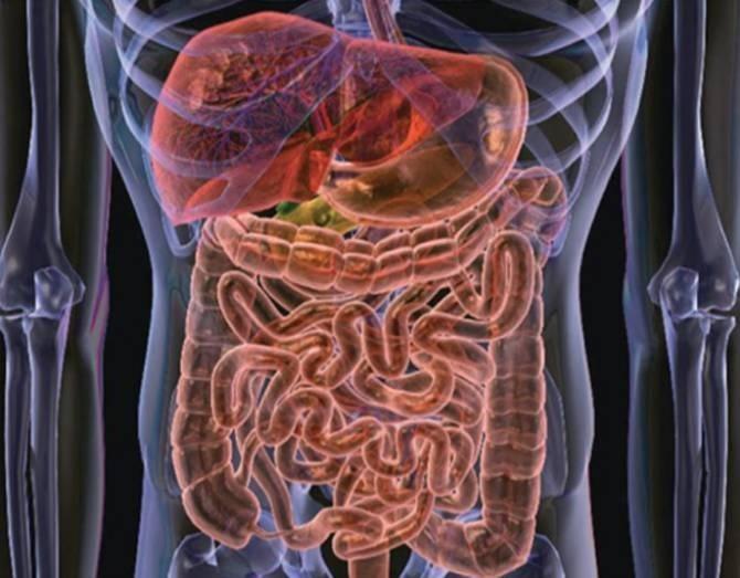 Bacterias podrían causar obesidad