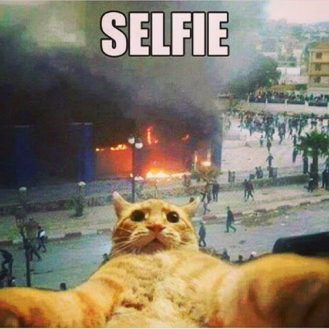 selfiecat