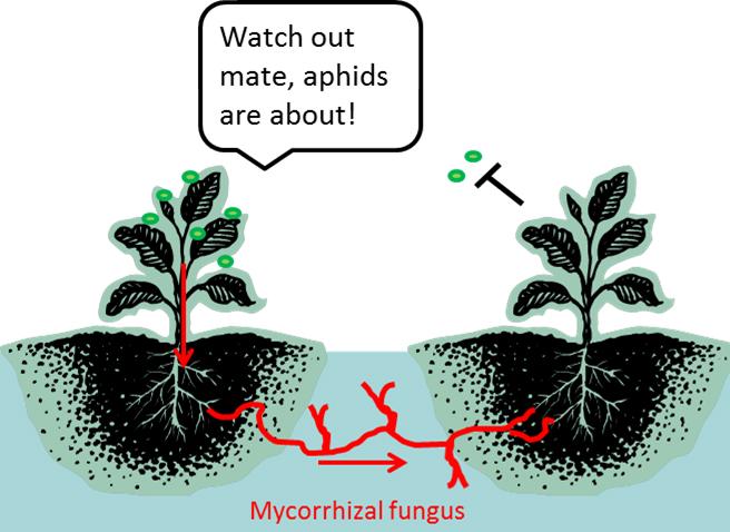 Las plantas se comunican de una forma no vista hasta ahora