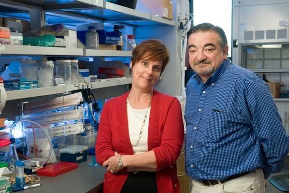 Crean proteína que impide avance de tumores cancerosos