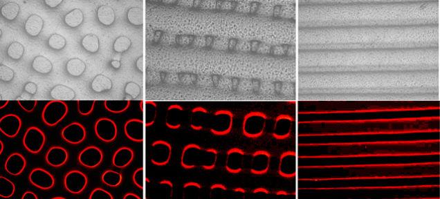 Material que cambia de color y textura como los pulpos