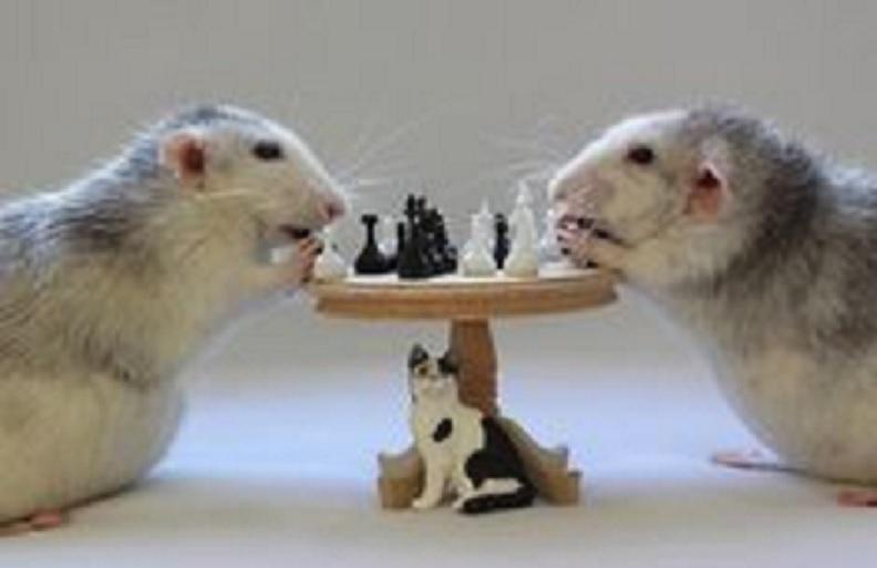 Implante cuadruplica inteligencia de ratones