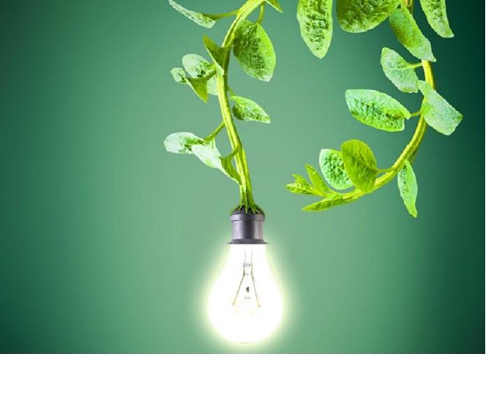 Generan electricidad de plantas vivientes para energizar alumbrado público