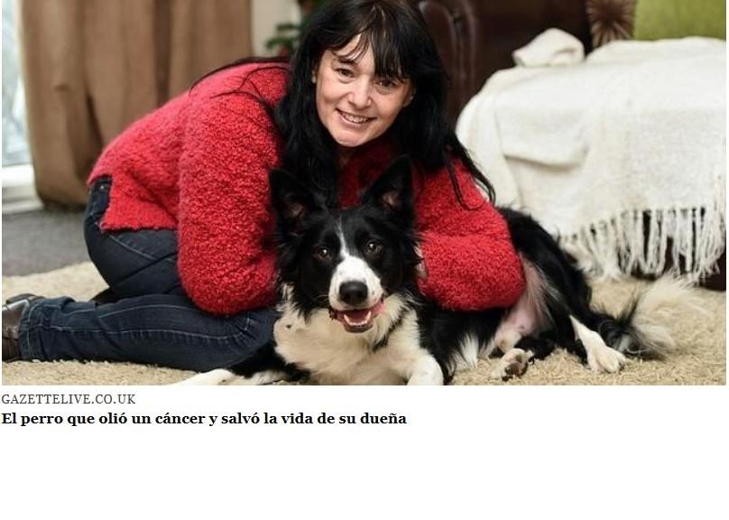 Perro olió un cáncer y salvó la vida de su dueña