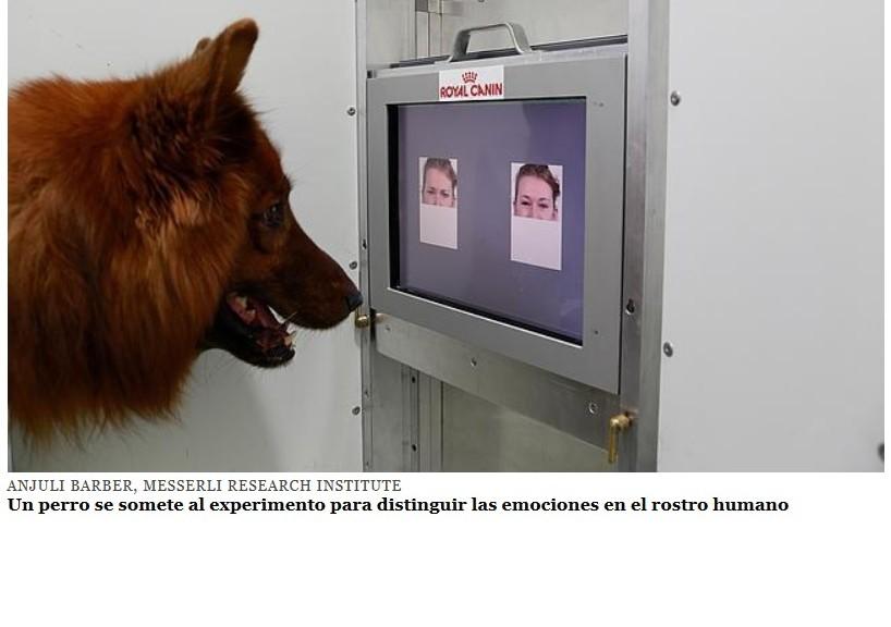 Su perro sabe leer las emociones de los humanos