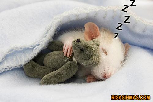 Modifican recuerdos en ratones dormidos