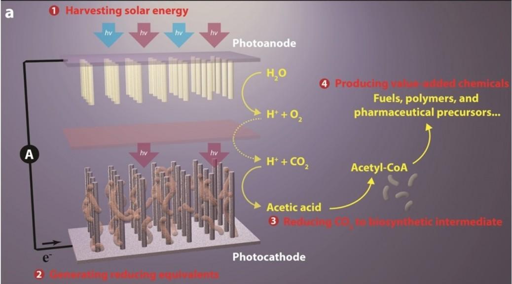 Fotosíntesis artificial convierte dióxido de carbono en plásticos, fármacos y biocombustibles