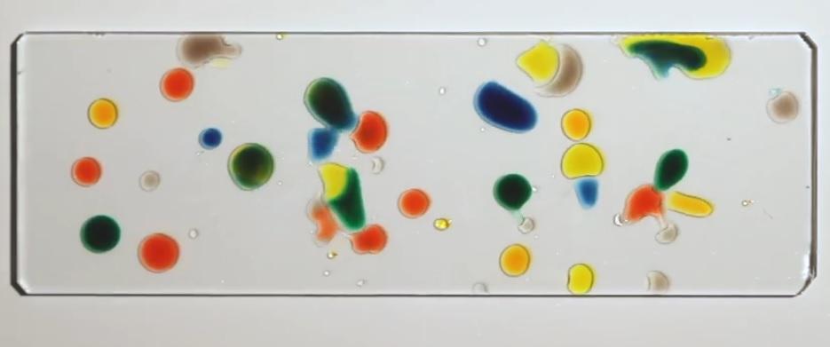 """Gotas de colores que se persiguen como organismos """"vivientes"""""""