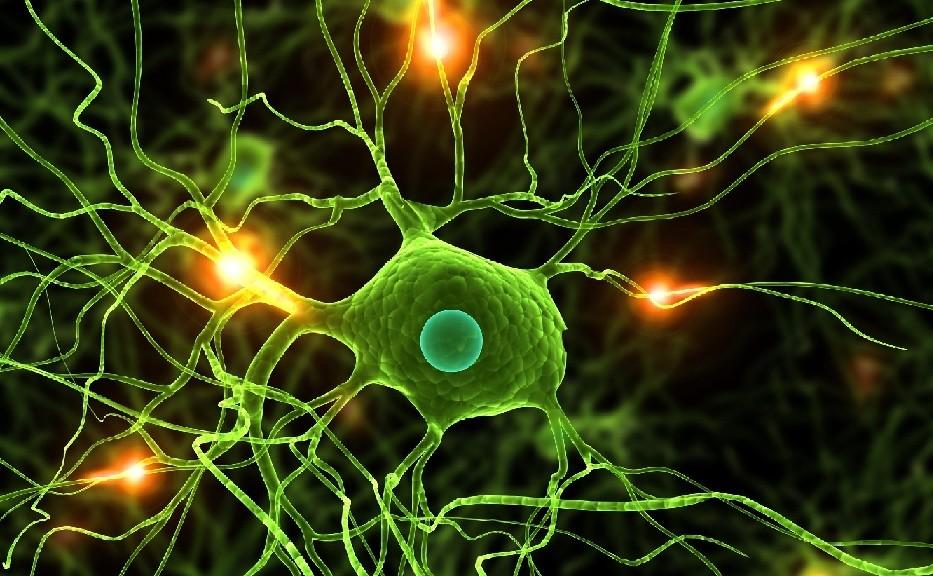 Nuestro cerebro funciona como Internet