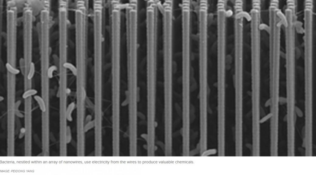 Nanomateriales y bacterias logran una fotosíntesis artificial eficiente