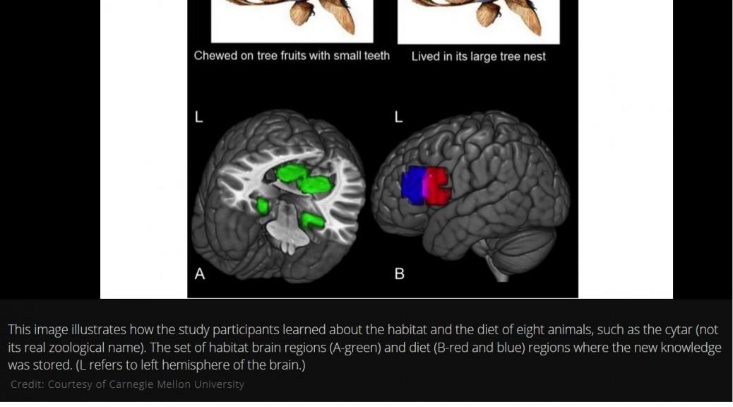 """Detectan el momento exacto en que el cerebro """"graba"""" un recuerdo"""