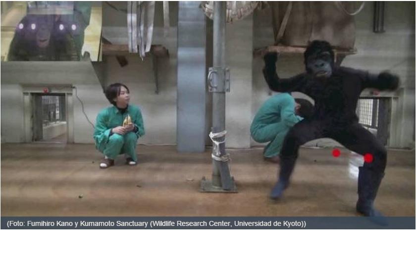 Los simios son capaces de distinguir una buena película de suspenso