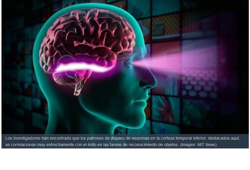 Localizan el lugar del cerebro que se encarga del reconocimiento de objetos