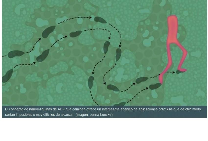 Desarrollan nanomáquina de ADN que camina