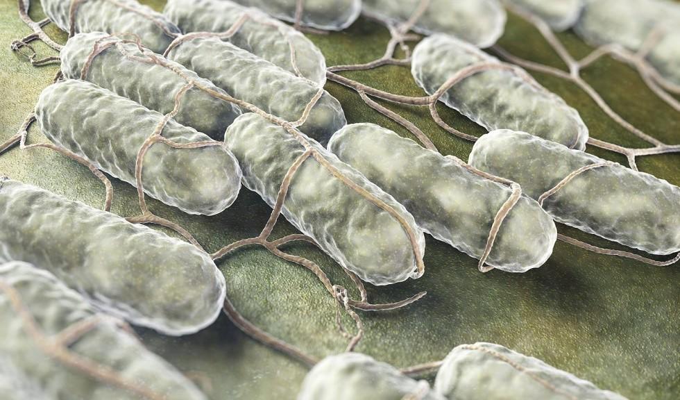 Nanopartículas activadas por luz capaces de destruir bacterias resistentes a drogas