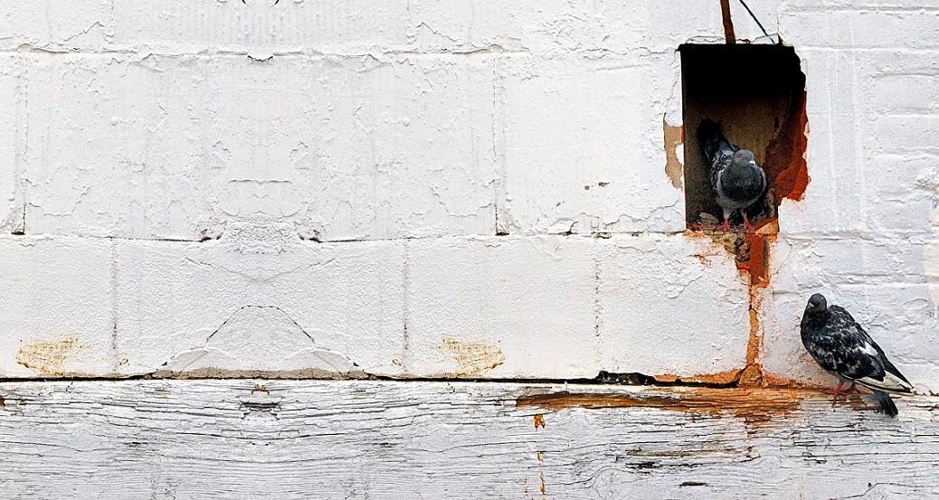 El gato de Schrödinger pasó de moda, ahora hay que preocuparse por 3 palomas en 2 agujeros