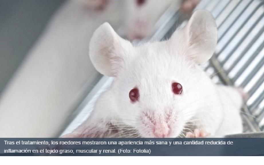 Logran retardar en un 35% el envejecimiento en ratones