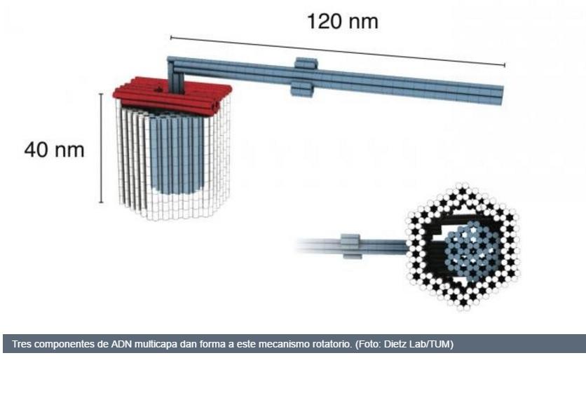 Crean rotor y pinzas nanométricos hechos con ADN