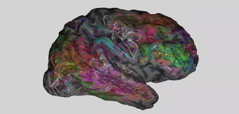 ¿Cómo almacena el cerebro el significado de las palabras?