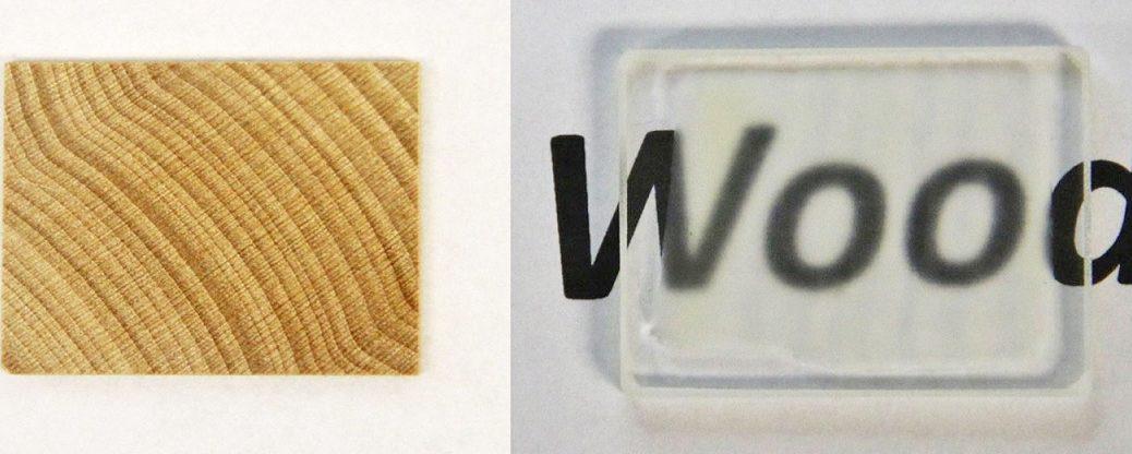 Científicos fabrican madera transparente que es más fuerte que el vidrio