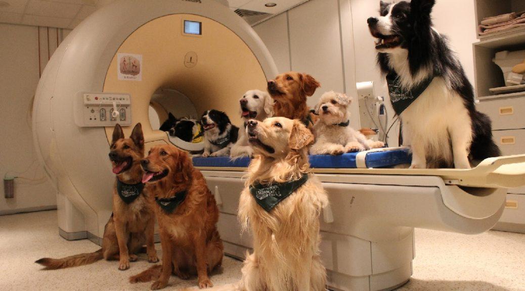 Los perros entienden nuestro lenguaje y la entonación