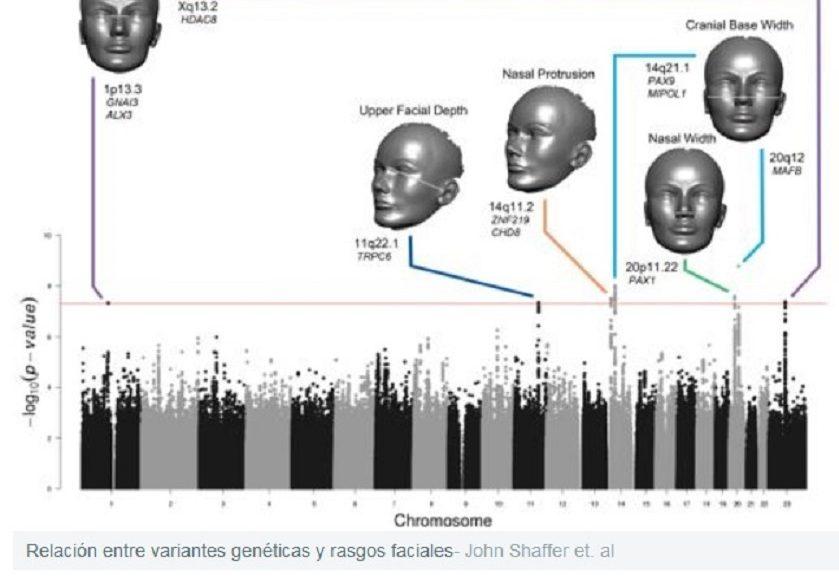 Identifican los genes que dan forma a la cara