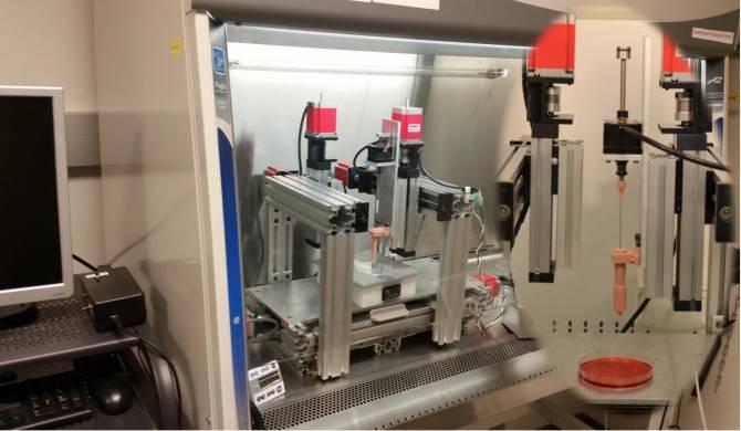 Cartílago generado por impresión 3D