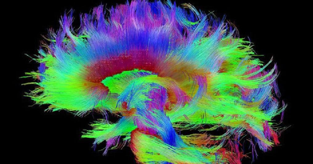 Científicos creen haber descubierto el lugar físico donde se ubica la conciencia humana