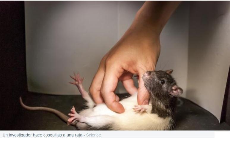 Identifican las neuronas responsables de las cosquillas