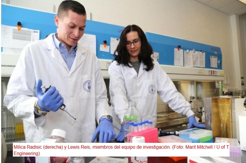 "Un biomaterial que ""avisa"" a células cutáneas para que acudan en masa a cerrar una herida difícil"