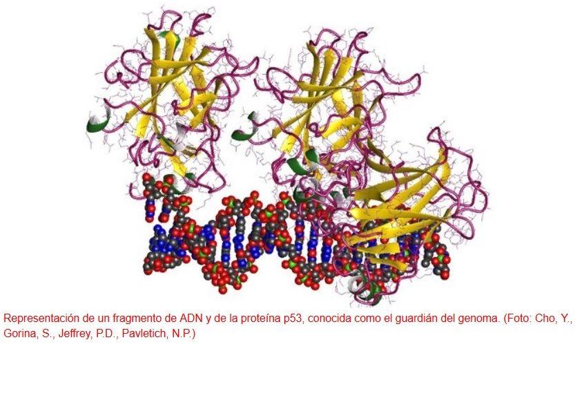 Un biosensor es capaz de detectar tumores en etapas tempranas
