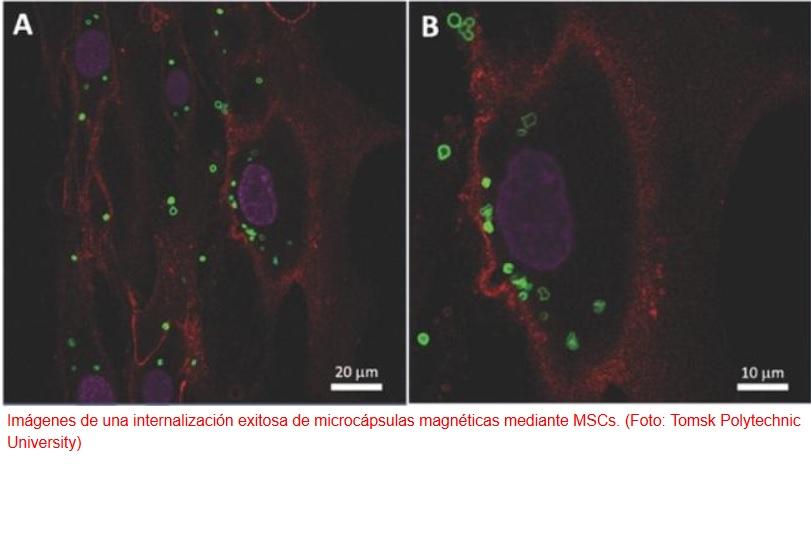 Células madre magnéticas para un tratamiento más eficaz de ciertas enfermedades