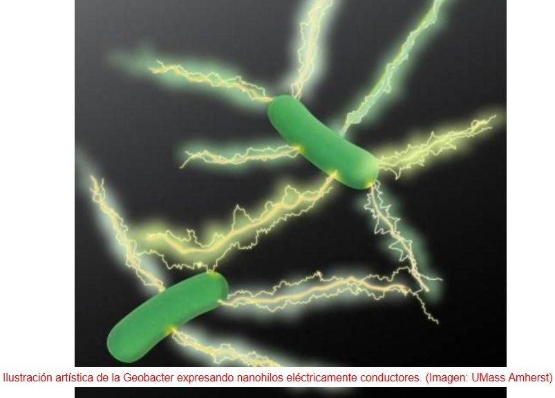 """Electrónica más """"verde"""" gracias a hilos eléctricos fabricados por bacterias"""