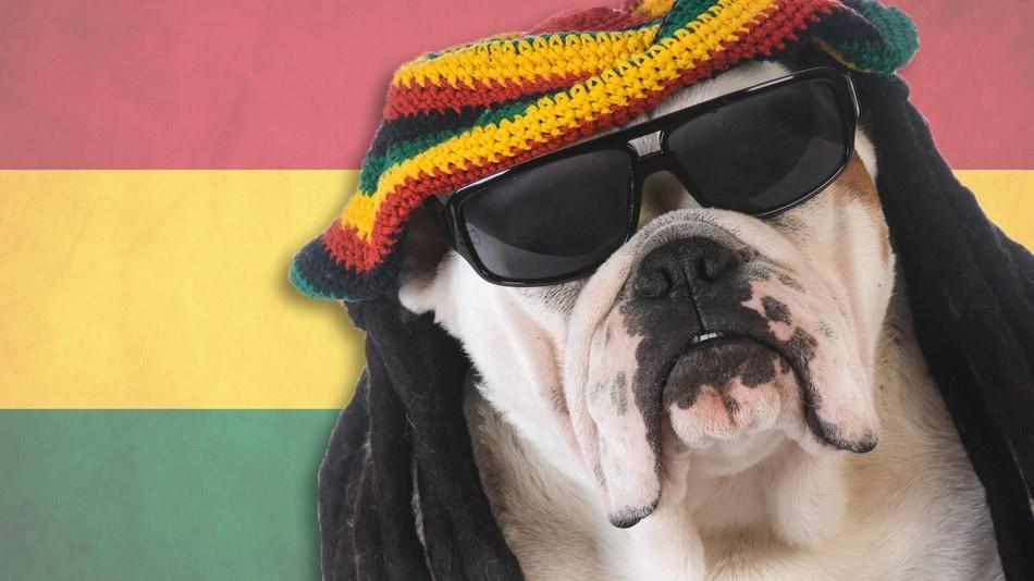 Los perros prefieren reggae y rock suave a otros géneros musicales